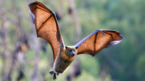 7 Things to Know About Nipah Virus