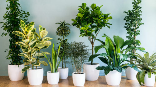 Improve Indoor Air Quality with These 3 Air Purifying Plants